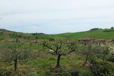 alberi da frutto Panorama
